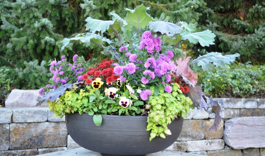 floral-container-in-kettle-pot