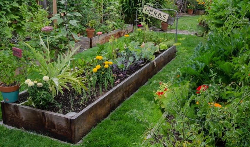 herb-vegetable-garden