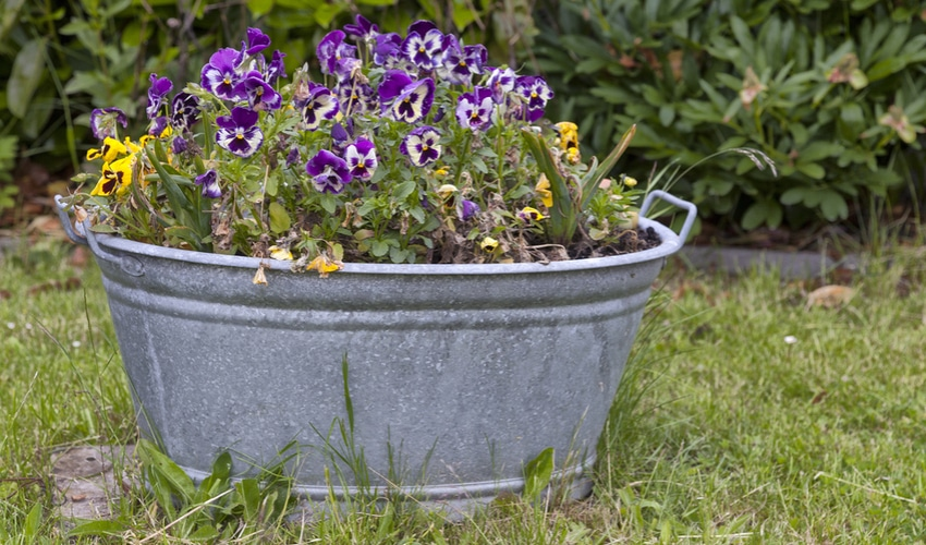 trough-flower-pot