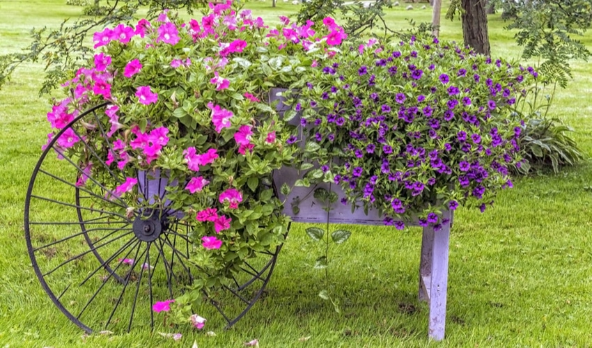wheelbarrow-flower-design